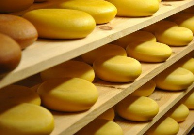 Dairy farm cheese
