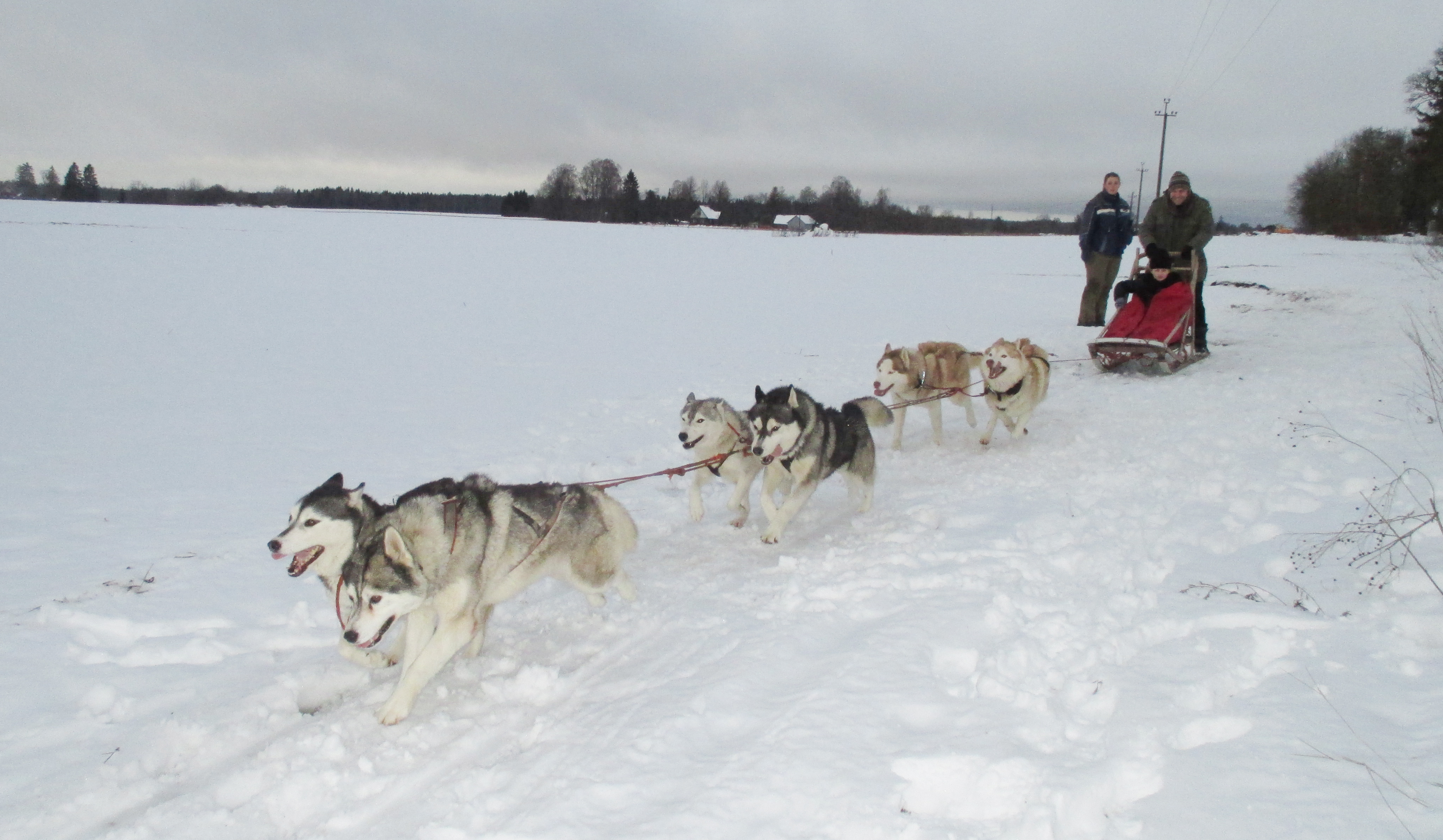 dog sled rides of winter park - HD 4096×2384